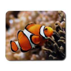 Clownfisk Musmatta