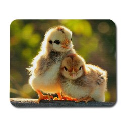 Kycklingar Musmatta