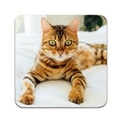2 ST Katt Bengal Underlägg