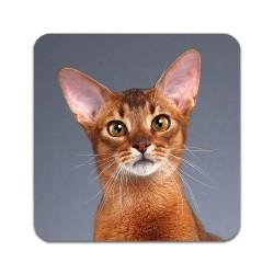 2 ST Katt Abessinier Underlägg