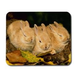 Kaniner Musmatta