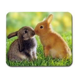Kyssande Kaniner Musmatta