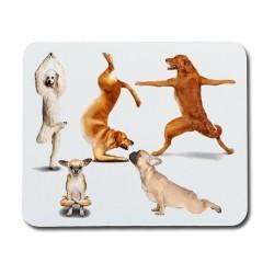 Yoga Hundar Musmatta