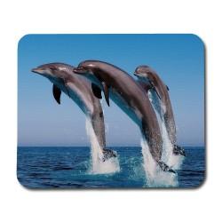 Delfiner Musmatta