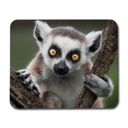 Lemur Musmatta