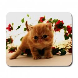 Exotic Katt Musmatta