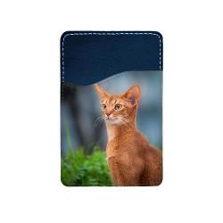 Katt Abessinier...