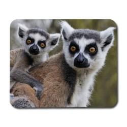Lemur Mamma & Baby Musmatta